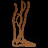 medicina-vascular